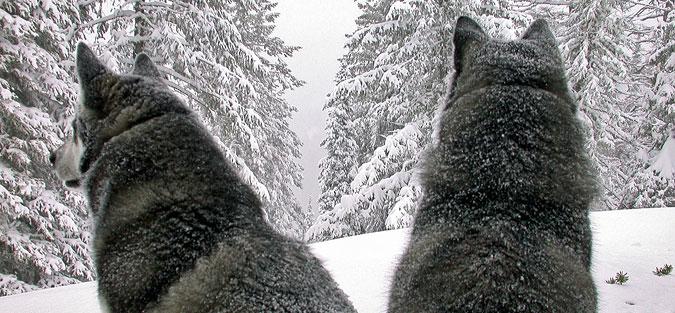 Aspen Shasta Snow