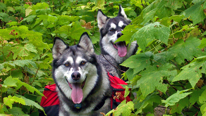 Shasta & Aspen in Thimbleberries